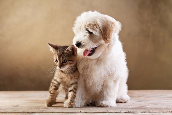 Animal Welfare in Cyprus